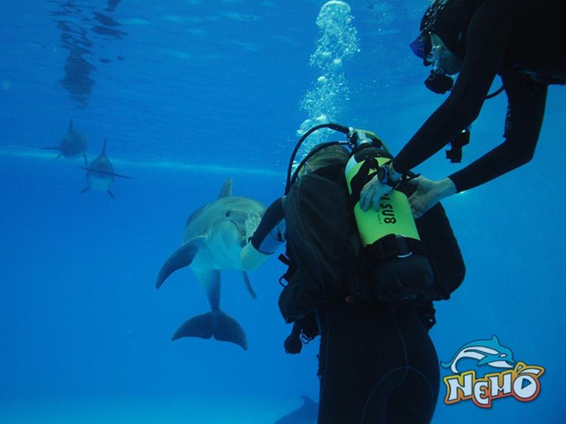 с дельфинами всего за 1000...