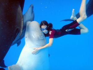 dolphintherapy-1