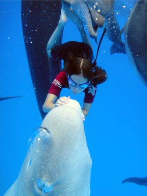dolphintherapy-2