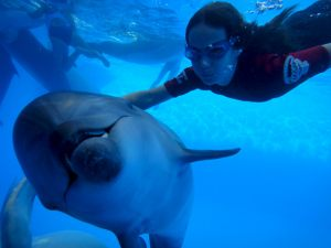 dolphintherapy-3