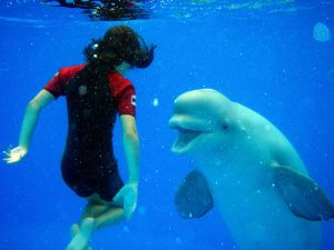 dolphintherapy-4