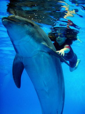 dolphintherapy-5