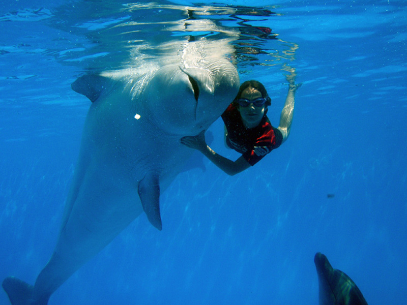 Swim with Dolphins - The Ultimate Vacation Thrill!