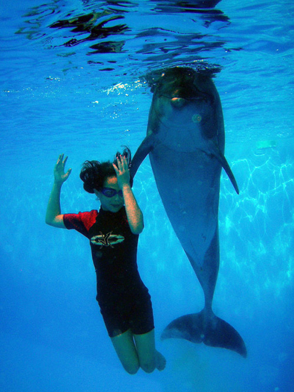 dolphin assisted therapy The upledger foundation was formed in 1987 to provide financial assistance for those who need but cannot afford craniosacral therapy.